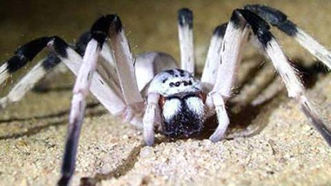 Arañas en acción: cazando su presa