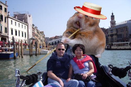 hamster espaguettis