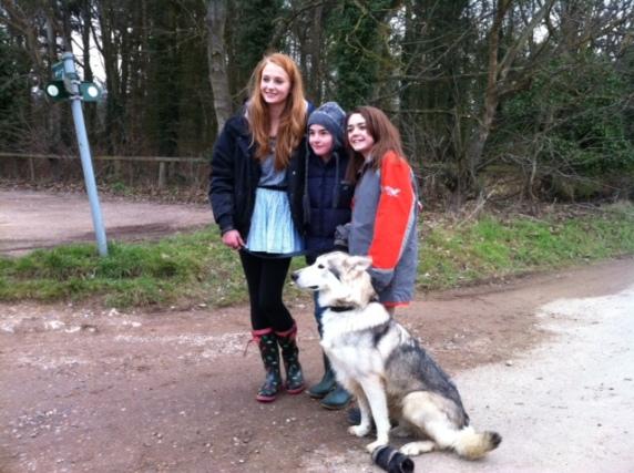 Sophie Turner sansa lobo adopción huergo dama