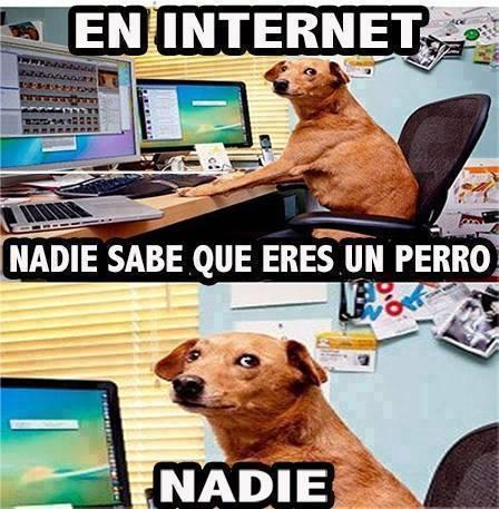 perro peligro internet desconocidos