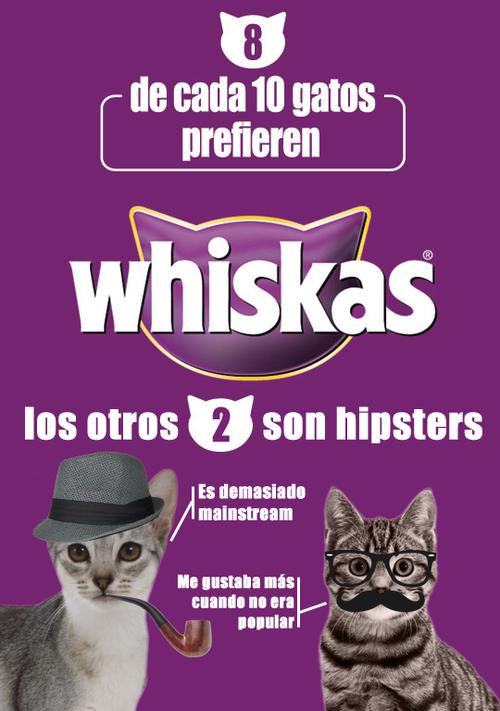 los gatos hipsters
