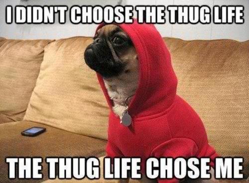 Thug life perro